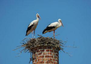 birds in the chimney