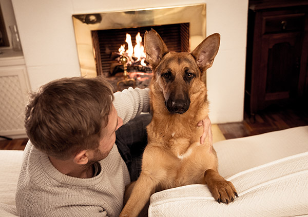 Fireplace safety with dog in front of fireplace.