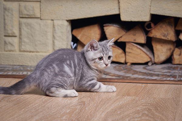 Fireplace safety with cat next to wood logs .